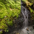 The hot springs trickle down a mossy cliff wall.- Sloquet Hot Springs