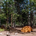 Shady tent camping at the forest's edge in the Big Flat Dispersed Camping Area.- Big Flat Dispersed Camping Area