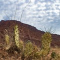 Desert landscape in the broad canyon near Ledge E.- Kane Creek Camping