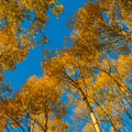 Come in the fall for an unbelievable color show.- Burlfriends Trail Hike