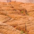 The namesake of Petrified Dunes Trail.- Snow Canyon State Park