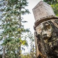 Some creative chainsaw work by trailbuilders.- Joffre Lakes Hike