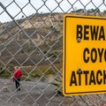 Dogs are welcome, but coyotes are a hazard in the area.- Mussel Rock Area
