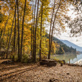 Campsites at Driftwood Bay.- Lillooet Lake Campgrounds