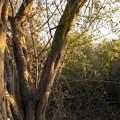 Unidentified species (help us identify it by providing feedback).- Temescal Ridge Trail Hike