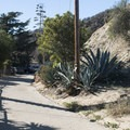 Runyon Canyon Road, Runyon Canyon Park.- Runyon Canyon Road Hike