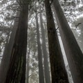 It is often foggy at the top of the trail.- Phleger Estate Loop Hike