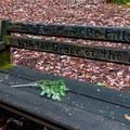 A poetic bench.- Phleger Estate Loop Hike