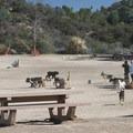 Laurel Canyon Dog Park.- Laurel Canyon Dog Park