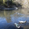 Heavenly Pond, Franklin Canyon Park.- Franklin Canyon Park