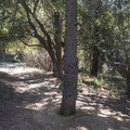 Ranch Trail in Franklin Canyon Park.- Franklin Canyon Park