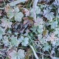 Frost in a crisp fall morning.- Bear Creek Falls Hike