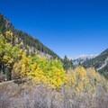 A hiker crosses an aspen grove in the fall.- Bear Creek Falls Hike
