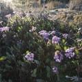 Unidentified species (help us identify it by providing feedback).- Point Dume State Beach