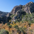 View of the Goat Buttes and valley floor with California sycamores from the Chaparral Trail within Malibu Creek State Park.- Malibu Creek State Park