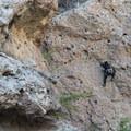 Climber above Rock Pool, Malibu Creek State Park.- Rock Pool Swimming Hole