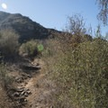 Chaparral Trail above Malibu Creek State Park Visitor Center.- Chaparral Trail Loop Hike