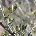 Unidentified species (help us identify it by providing feedback).- Chaparral Trail Loop Hike