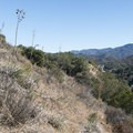 Typical brush vegetation along the Chaparral Trail.- Chaparral Trail Loop Hike