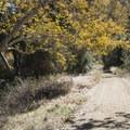 Mott Road, Malibu Creek State Park.- Chaparral Trail Loop Hike