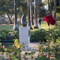 Rose garden at Palisades Park, Santa Monica.- Palisades Park, Santa Monica