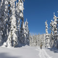 The first half-mile follows a wide road.- Newton Clark Moraine (Ridge Between) Backcountry Ski