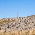 Shepherd and his flock.- Last Dollar Road