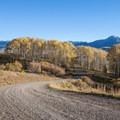 Last Dollar Road winds through aspen groves.- Last Dollar Road