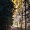 Last Dollar Road narrows to a single lane under the trees.- Last Dollar Road