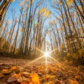 Sunset over a carpet of leaves on Last Dollar Road.- Last Dollar Road
