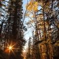 Sunset behind the trees on Last Dollar Road.- Last Dollar Road