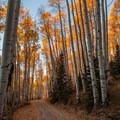 Golden path.- Last Dollar Road