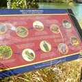 One of many signs providing nature information.- Southside Community Park
