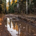 Muddy puddles provide beautiful reflections, but they can make the road impassable after heavy rains.- Dallas Divide Scenic Route