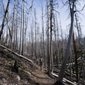 Surrounded by the burn area.- Vista Ridge Trail Hike
