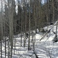 Trail through the trees along the Buffalo Mountain Loop.- Buffalo Mountain Loop Snowshoe