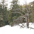The trail to Loch Vale.- The Loch Vale Snowshoe