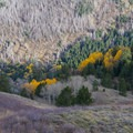 Aspens near the trailhead.- Deseret Peak Hike