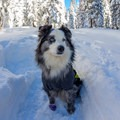 If your dog likes the snow, this is a great spot to explore.- Echo Lake Snowshoe