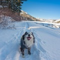 The Echo Lake snowshoe is a great hike for dogs.- Echo Lake Snowshoe