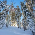 Sunlight streams between the trees on the way to Echo Lake.- Echo Lake Snowshoe