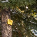 Yellow diamond marker.- Yellow Trail Snowshoe in Sugar Pine Point State Park