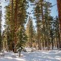 Yellow Trail at Sugar Pine Point State Park.- Yellow Trail Snowshoe in Sugar Pine Point State Park