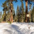 Trailhead near the restrooms.- Orange Trail Snowshoe in Sugar Pine Point State Park
