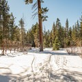 Orange Trail at Sugar Pine Point State Park.- Orange Trail Snowshoe in Sugar Pine Point State Park