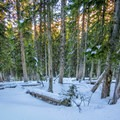 Thick forest on the approach to Scott Hill.- Scott Hill Snowshoe