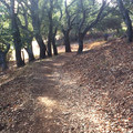 Shade is rare along this route through Terra Linda/Sleepy Hollow Open Space Preserve.- Terra Linda Fire Road + 680 Trail Hike