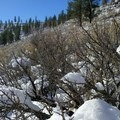 Snow collects on sage branches in winter.- Hole-in-the-Ground
