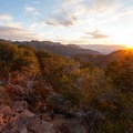 Sunset, mountain mahogany, and a sandstone outcrop at the summit of Mount Aire.- Mount Aire Hike