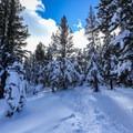 The snowshoe trail to Chickadee Ridge.- Chickadee Ridge Snowshoe